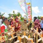 Berkat DIGROW Produksi Jagung di Parepare Capai 10 Ton Hektar